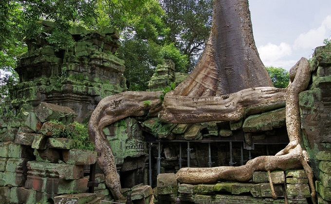 Amazing Ta Prohm Temple